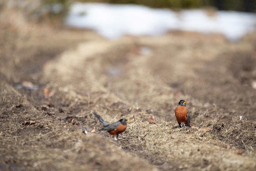 Robin Photobomb by Brian Hale