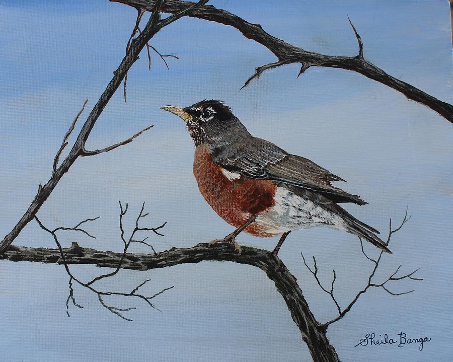 Robin by Sheila Banga