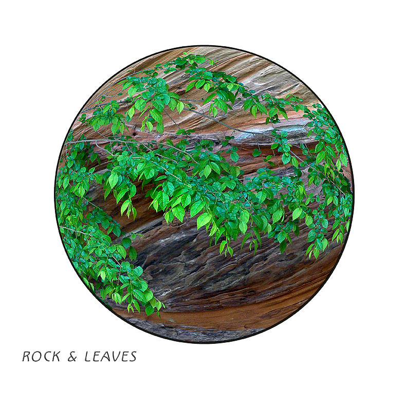 Zion Photograph - Rock and Leaves by Peter Anger