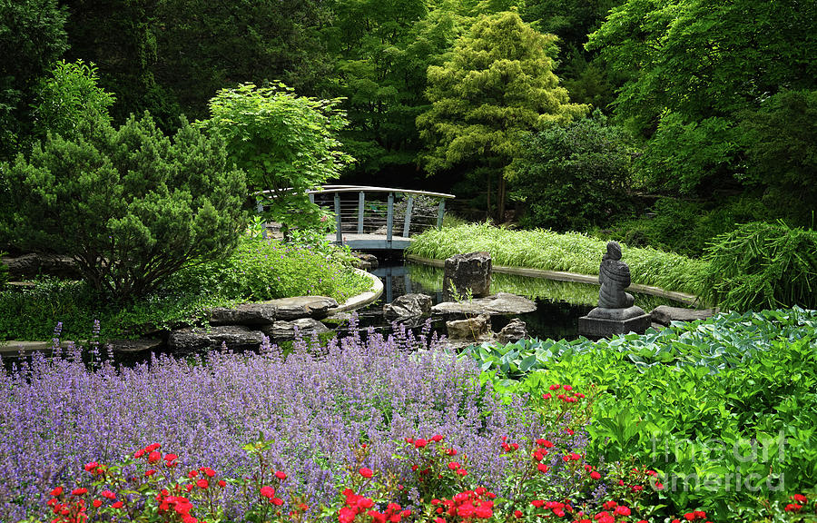 Rock Garden Peace and Beauty by Rachel Cohen