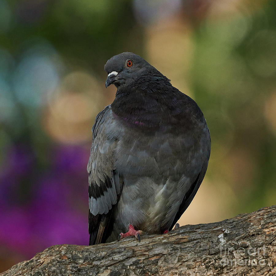 Rock Pigeon Perched on a Tree Colorful Background by Pablo Avanzini