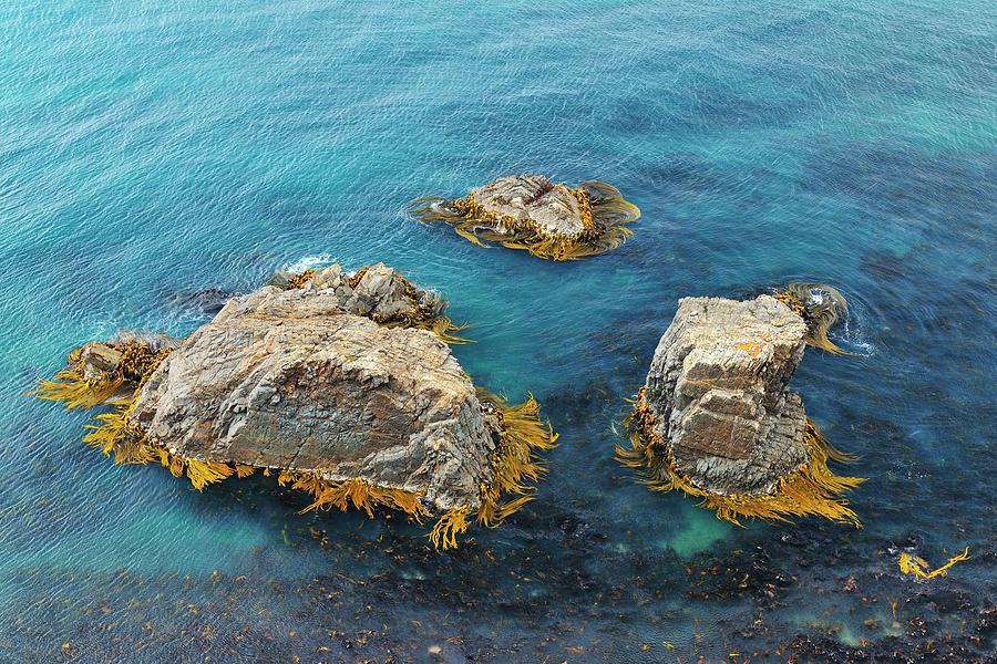Rock With Seaweed Photograph by Raimund Linke
