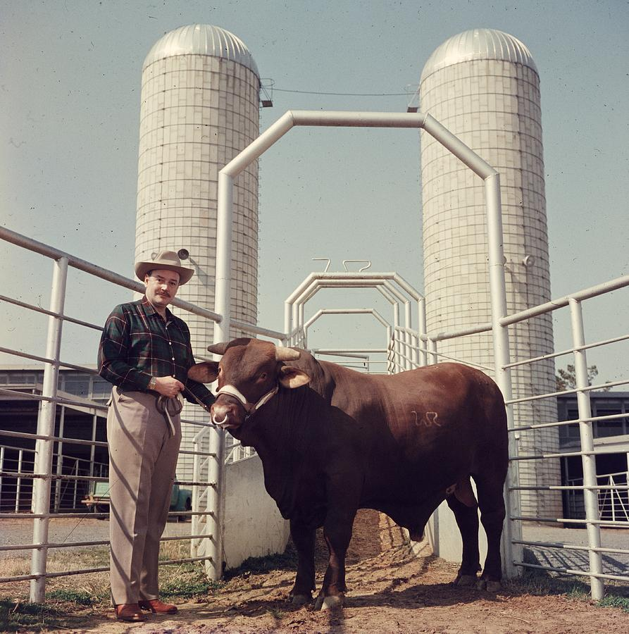 Rockefeller And Bull Photograph by Slim Aarons