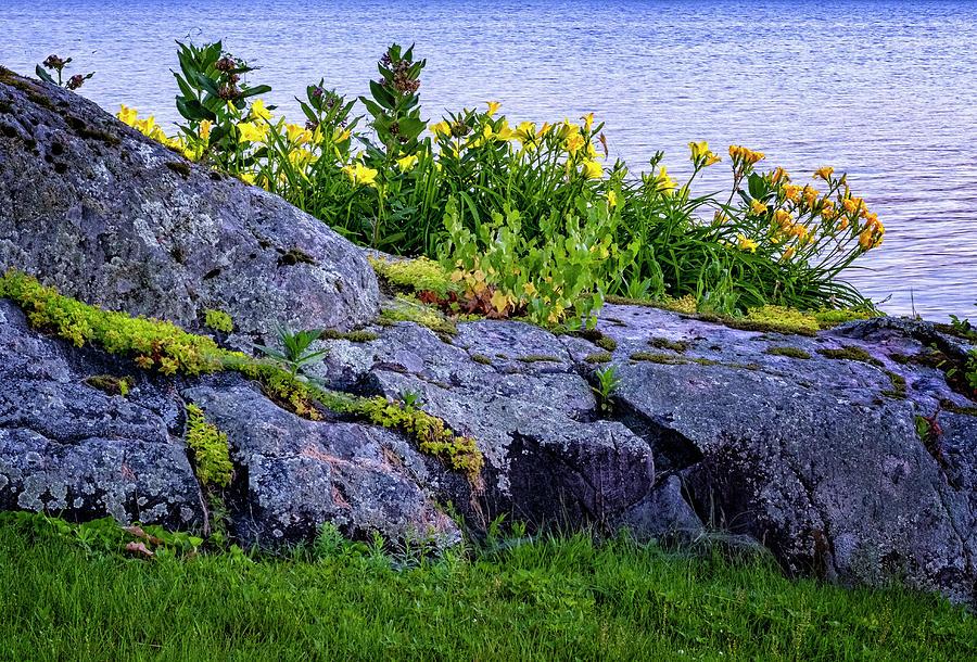 Rocks And Flowers by Tom Singleton