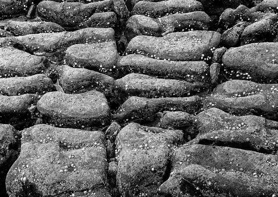 Rocks And Shells Monochrome by Jeff Townsend