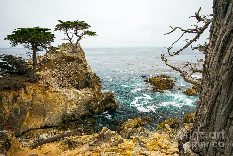 Big Photograph - Rocky Cliff And Trees In Carmel Near by Lynn Yeh