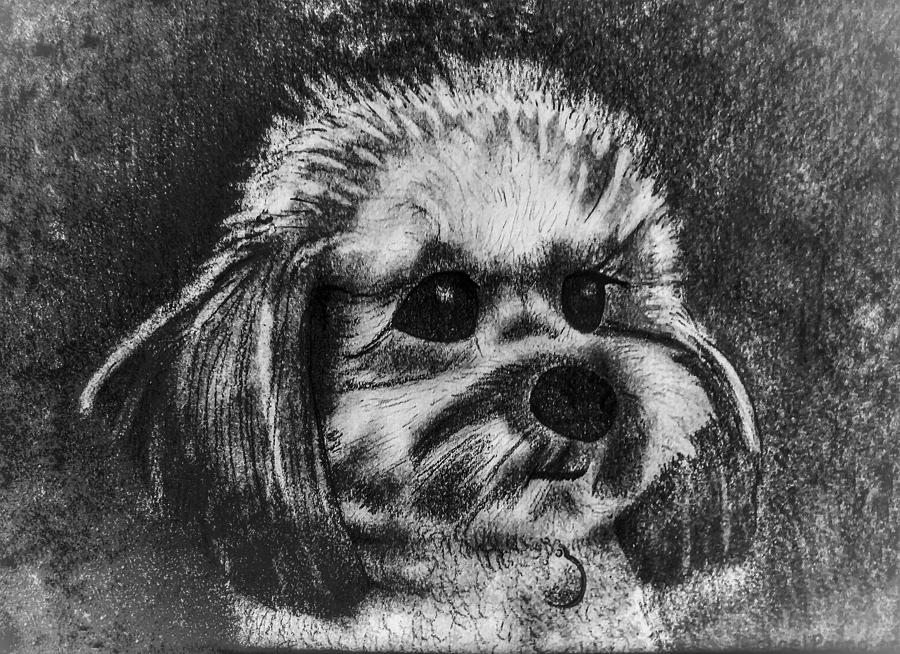 Rocky The Dog Portrait Drawing
