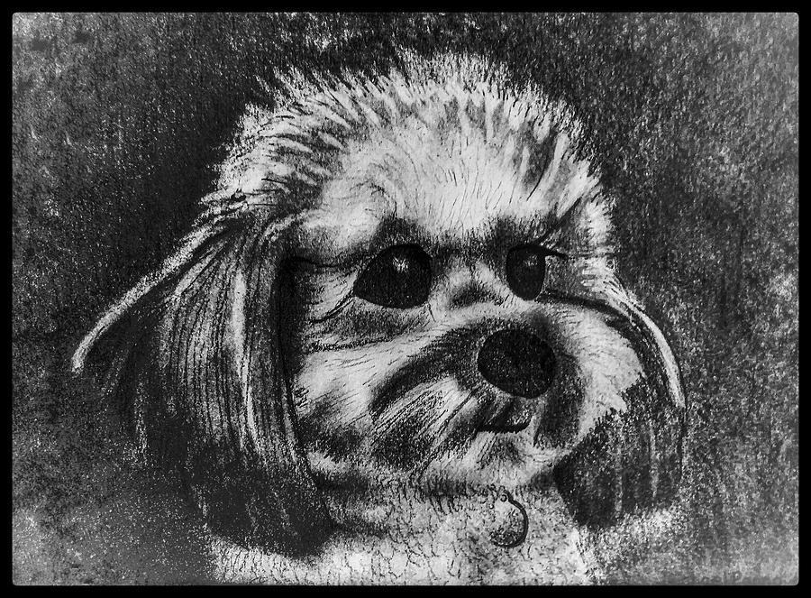 Rocky The Dog Portrait W/ Border Drawing