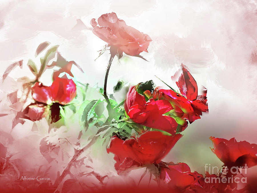 Rojos by Alfonso Garcia