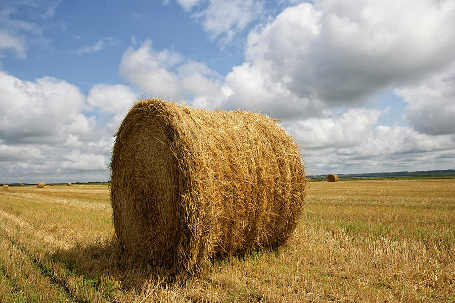 Rolled Hay Bale  In Harvested Field Photograph by Cameron Davidson
