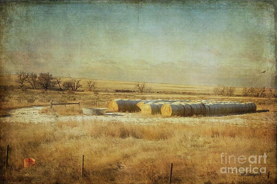 Rolled Hay by Rebecca Langen