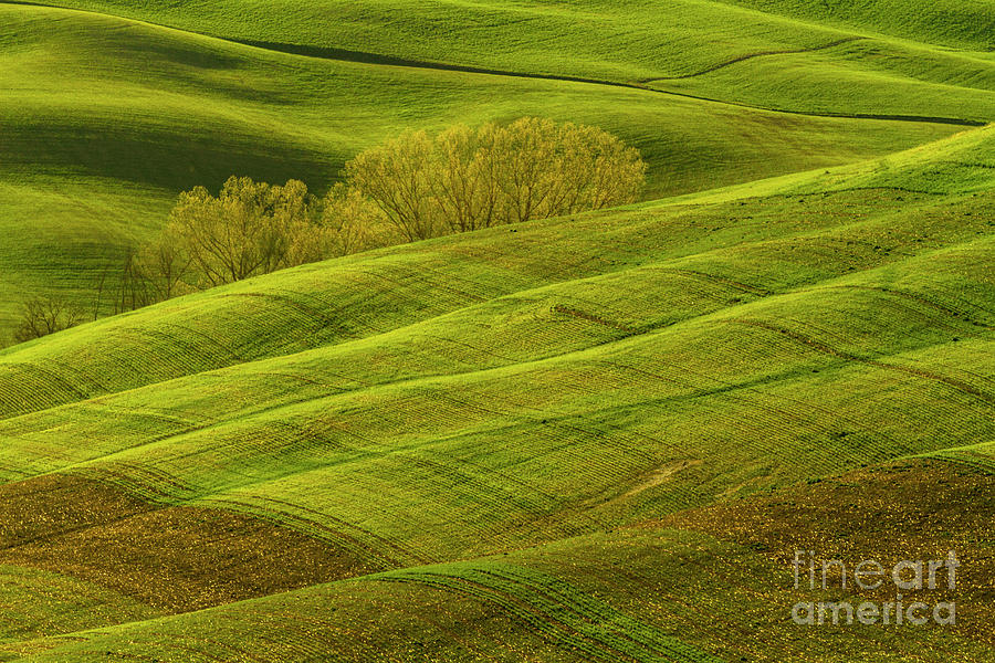 Rolling Grassy Landscape Tuscany-1 by Heiko Koehrer-Wagner