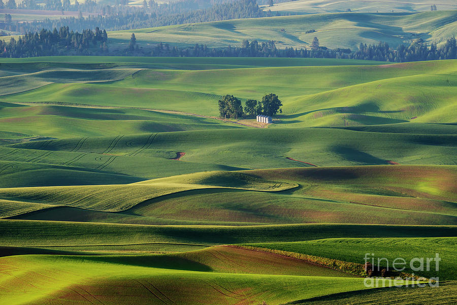 Rolling Green by Mike Dawson