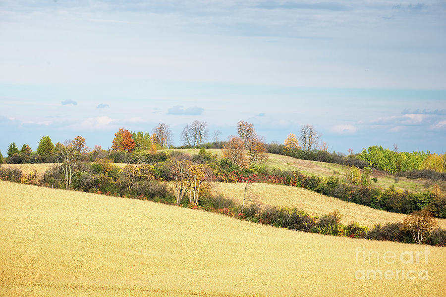 Rolling Hills In Fall by Les Palenik