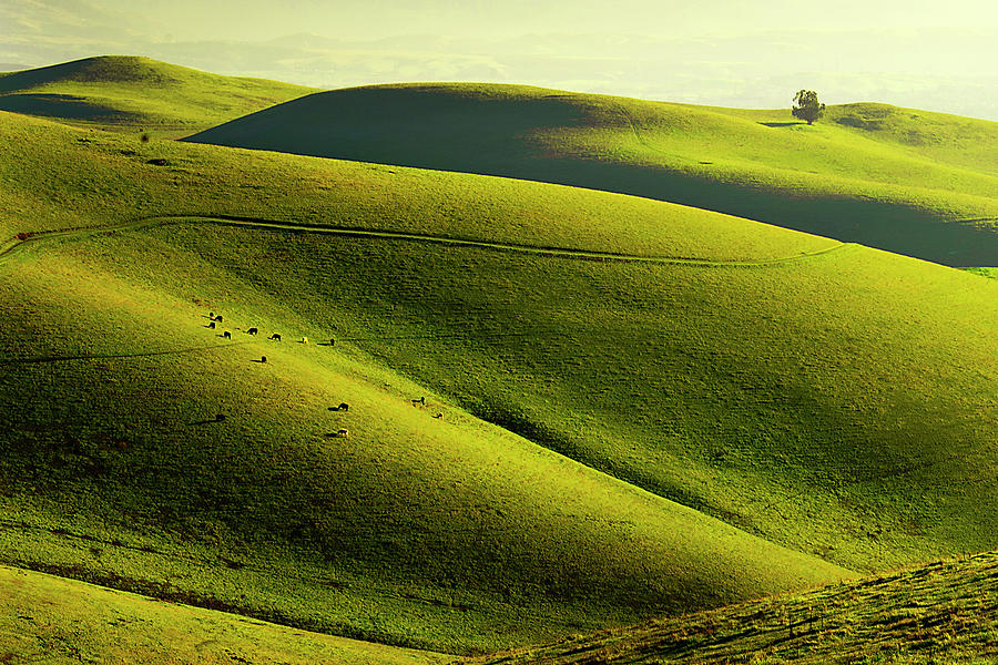 Rolling Hills In Livermore Photograph by Copyright (c) Richard Susanto