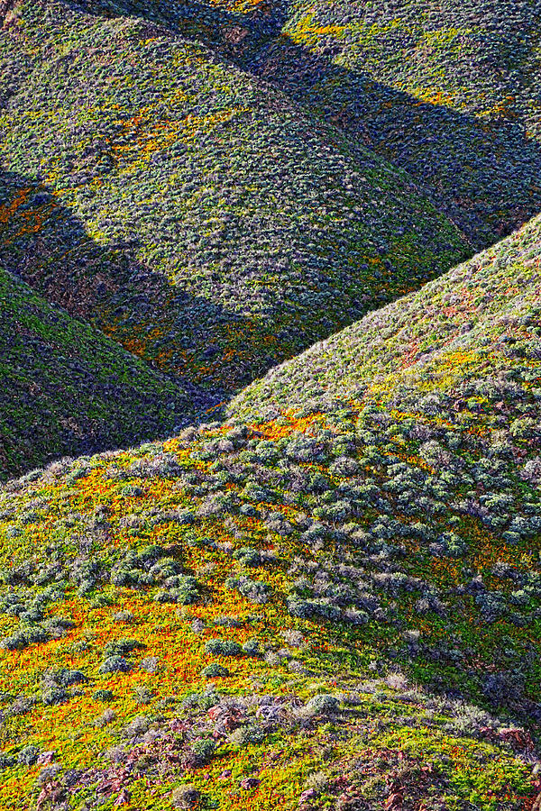 Poppies Photograph - Rolling Hillsides In California - Vertical by Glenn McCarthy Art and Photography