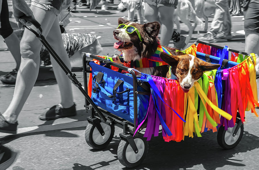 Rolling With Pride by Jonathan Nguyen