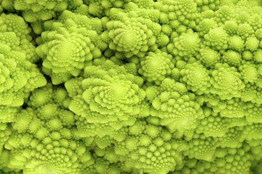 Roman Cauliflower Photograph by Marcoventuriniautieri