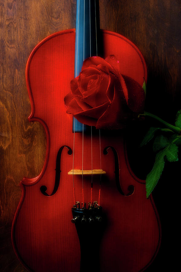 Violin Photograph - Romantic Rose With Violin by Garry Gay