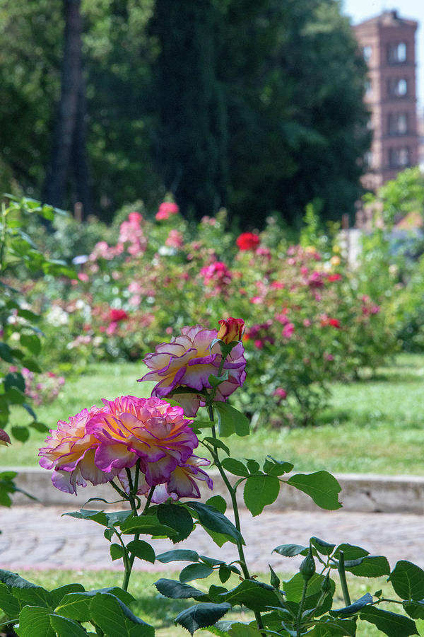 Aventine Hill Photograph - Rome Rose Garden by Joseph Yarbrough