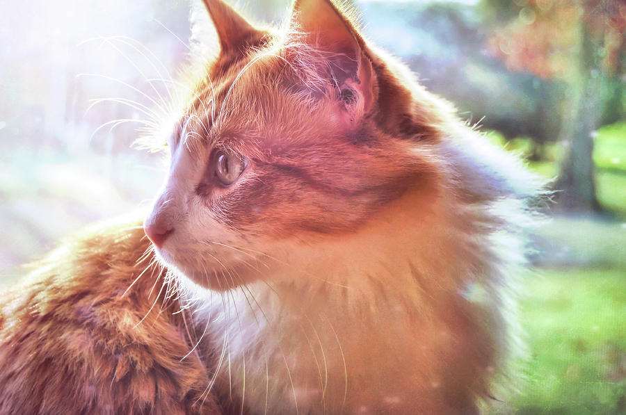 Cat Photograph - Ronald by JAMART Photography