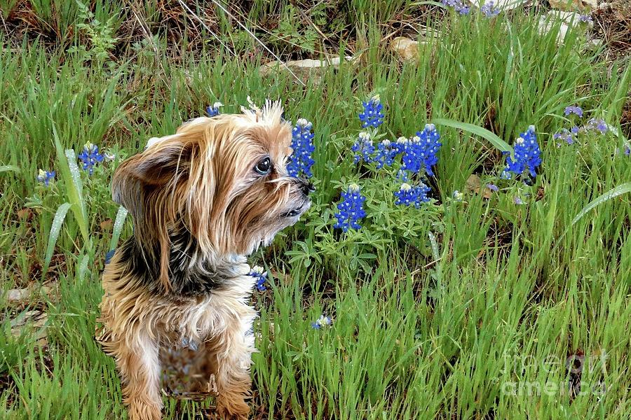 Roo and Texas Bluebonnets by Janette Boyd