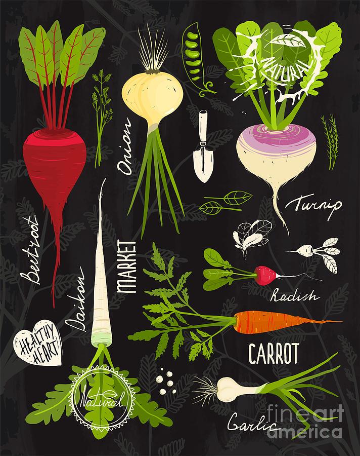 Symbol Digital Art - Root Vegetables With Leafy Tops Set by Popmarleo