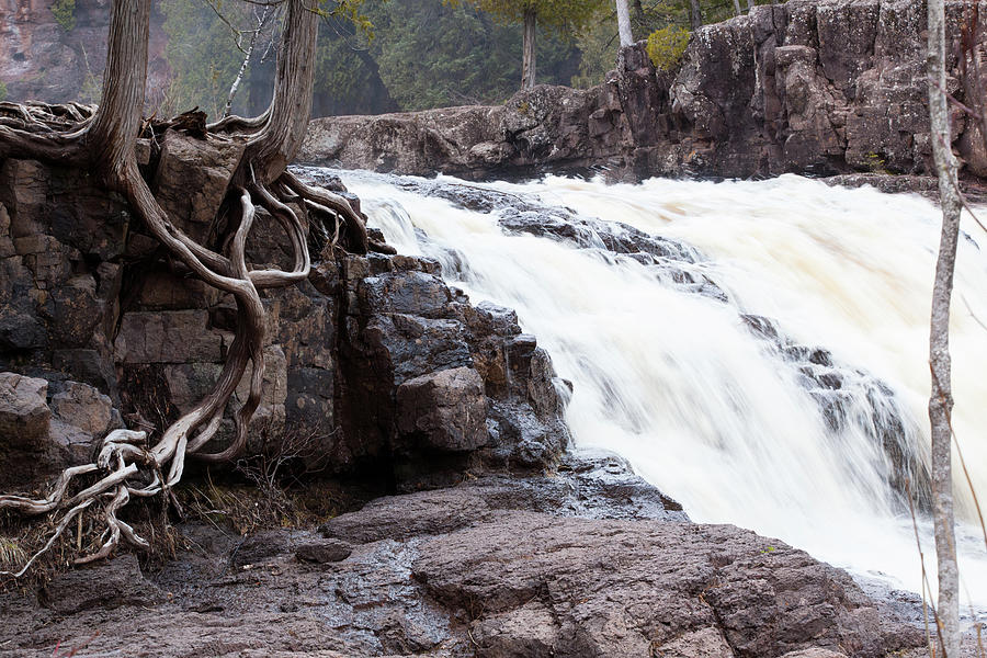 Roots Photograph - Roots And Falls by Allen Penton