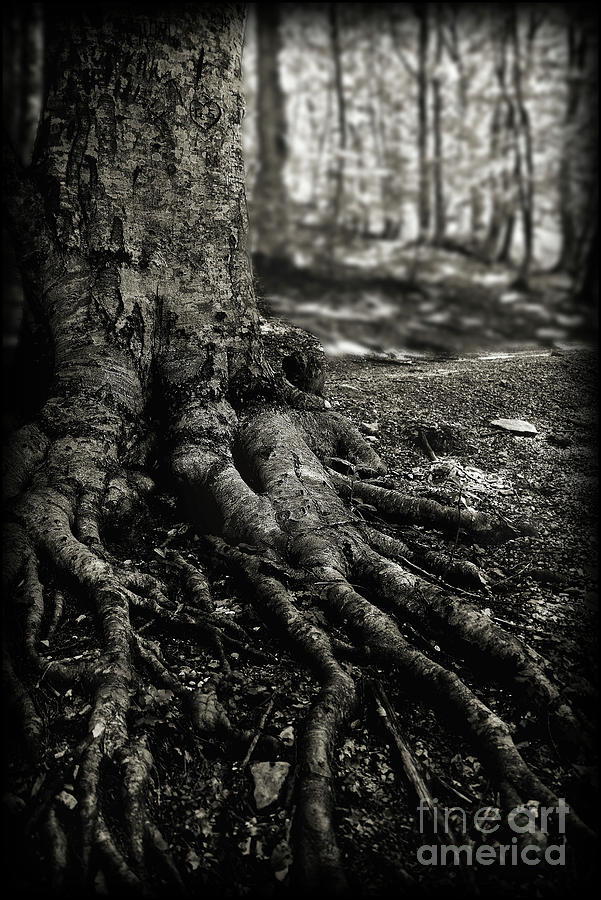 Roots by Arnaldo Tarsetti