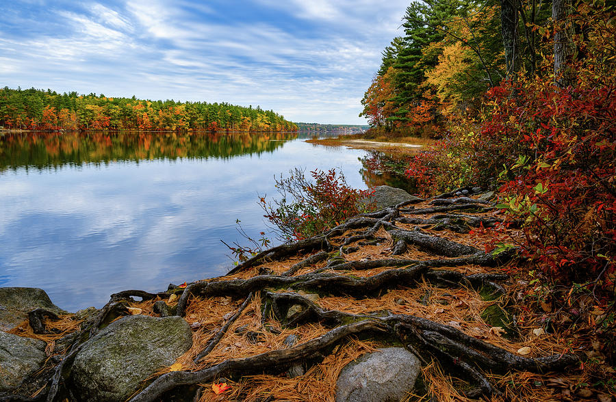 Roots, Massabesic Lake N H by Michael Hubley