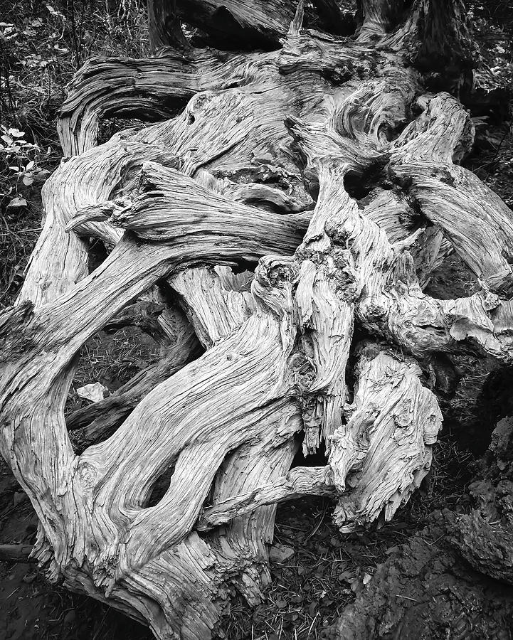 Roots by Patrick Cosgrove