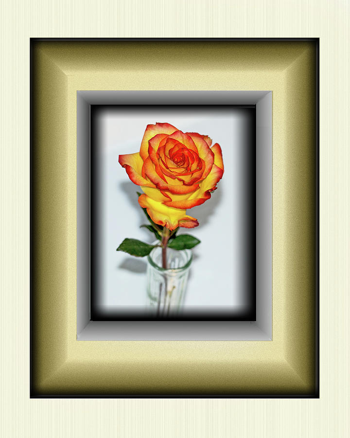 Rose 1 by Richard Risely