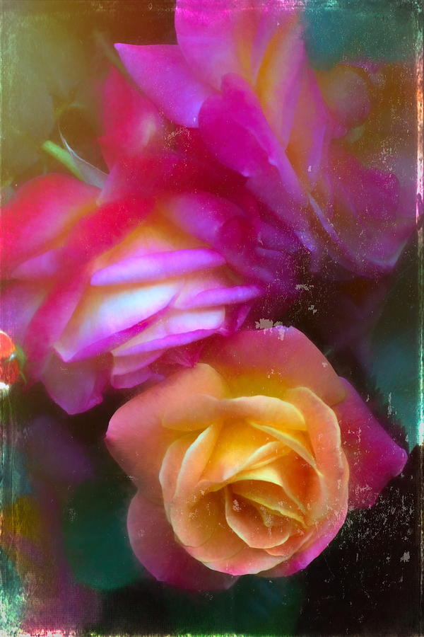 Rose 394 by Pamela Cooper