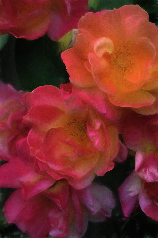 Rose 396 by Pamela Cooper