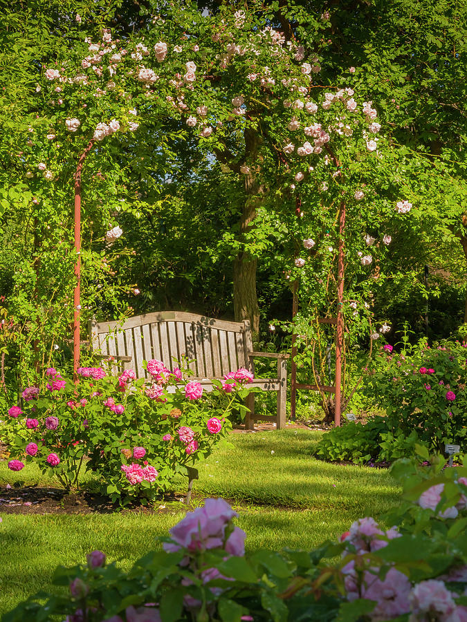 Rose Arbor by Mark Mille
