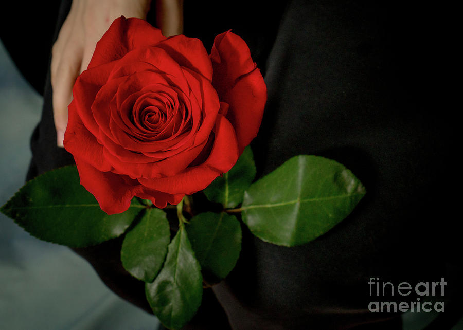 Rose are Red by Annerose Walz