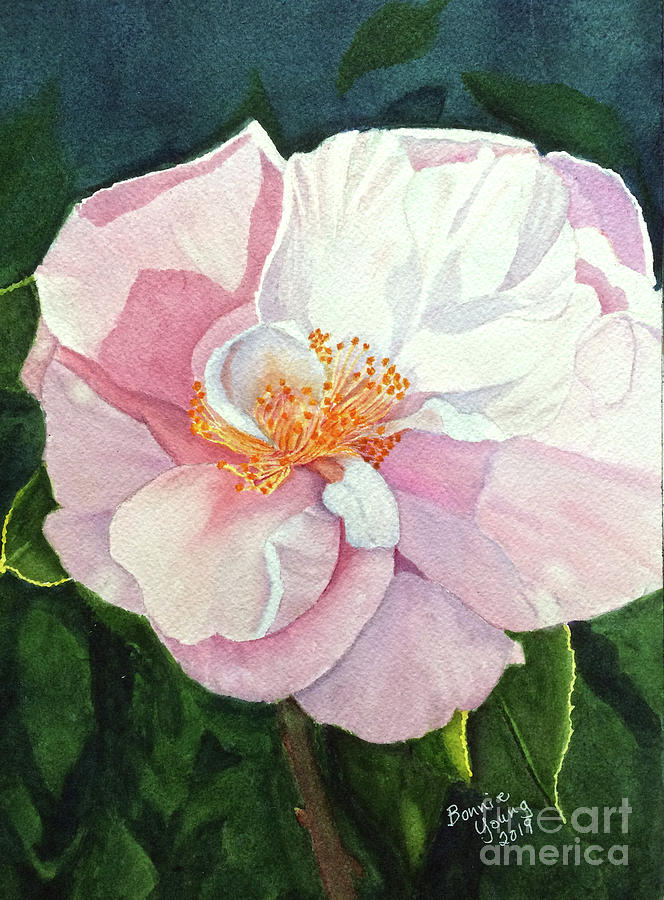 Rose at Night by Bonnie Young