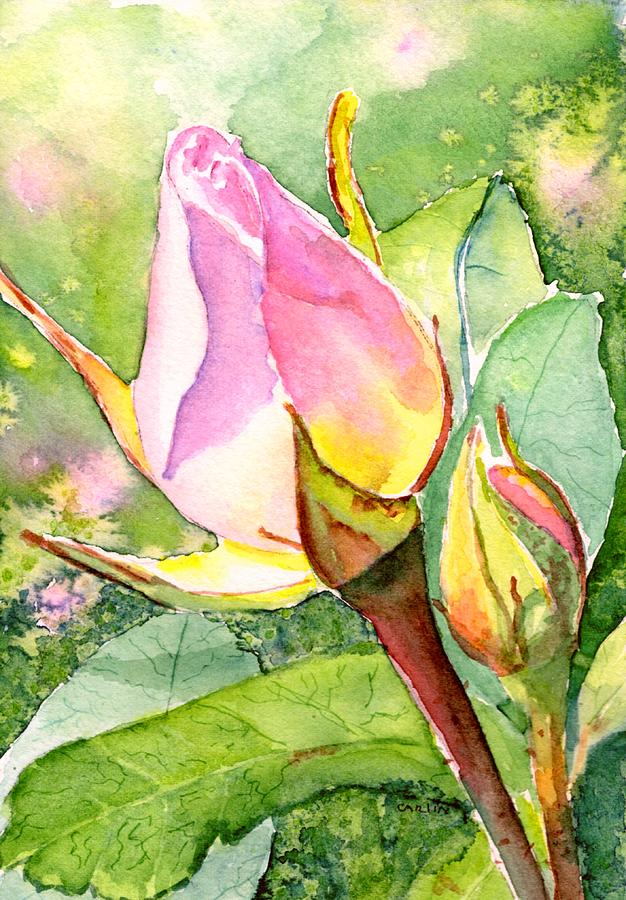 Rose Buds in the Garden by CarlinArt Watercolor