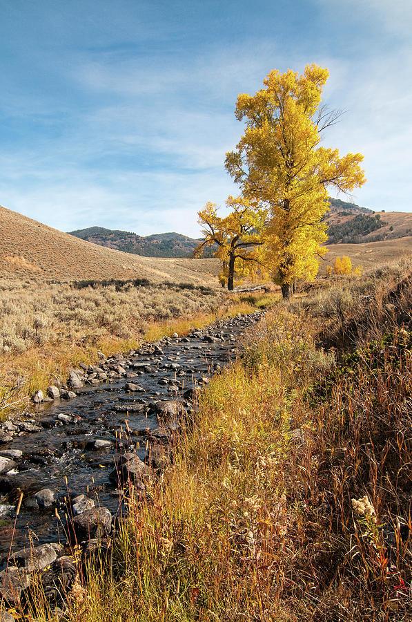 Rose Creek by Steve Stuller