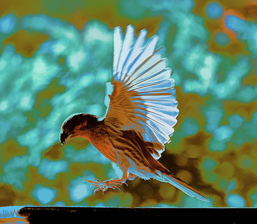 Rose Finch Landing Abstract 1 by Linda Brody