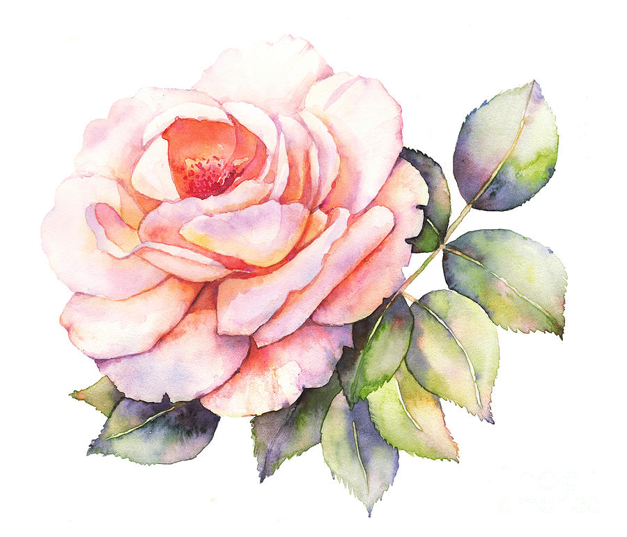 Pink Digital Art - Rose Flower Watercolor Illustration by Anemad