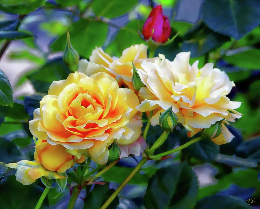 Rose Photograph - Rose Garden by Rick Lawler