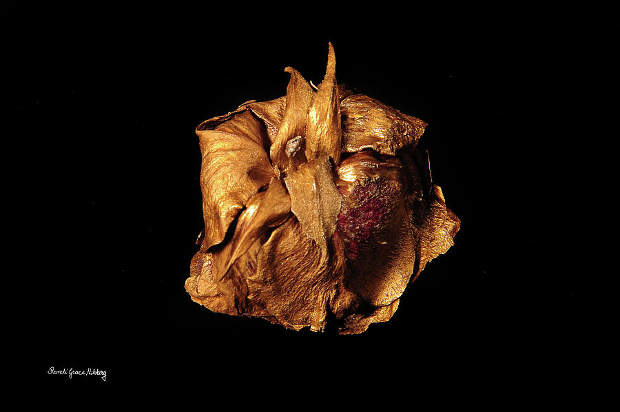 Rose Gold by Randi Grace Nilsberg