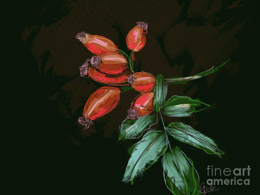 Rose hip by Go Van Kampen