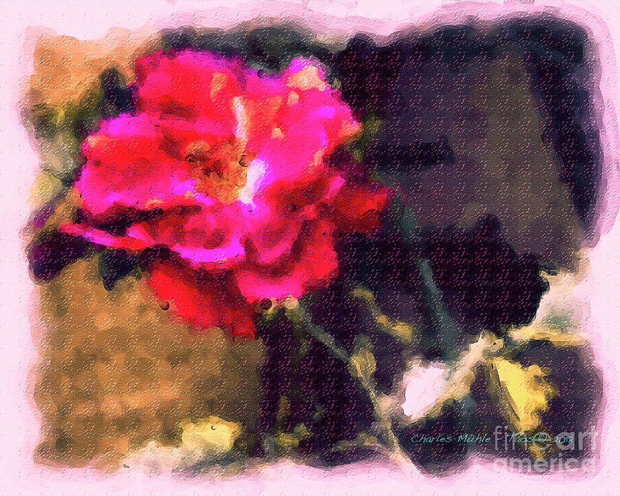 Rose in Aquarelle by Charles Muhle