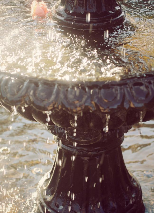 Rose in Waterfountain by The Art Of Marilyn Ridoutt-Greene