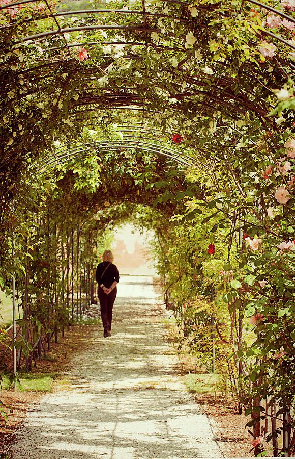 Roses Digital Art - Rose Love Path by Luisa Vallon Fumi