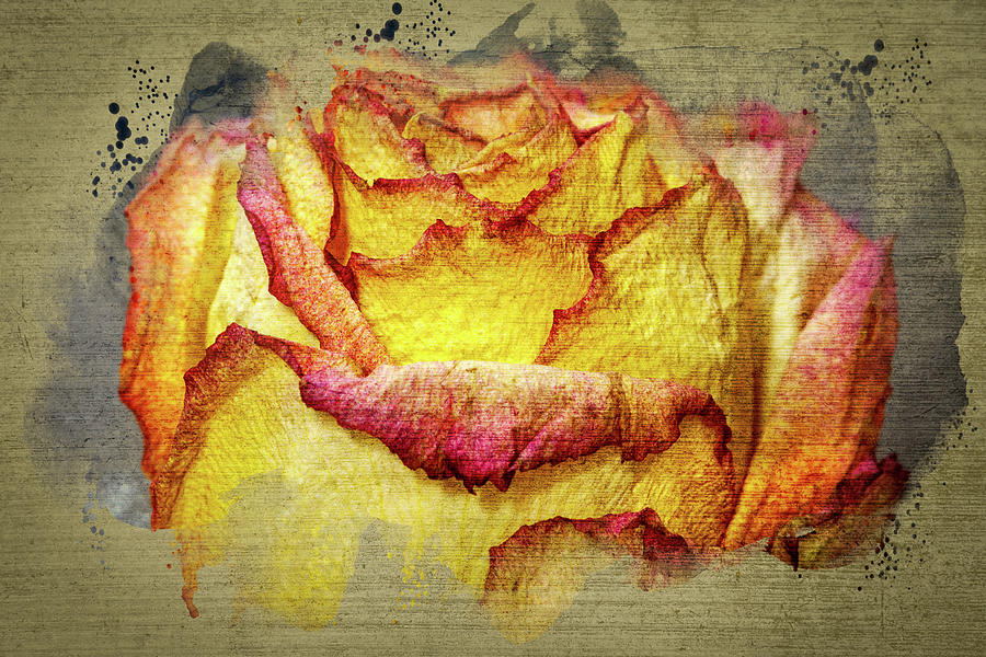 Rose Painting - Rose Painting by Mike Penney