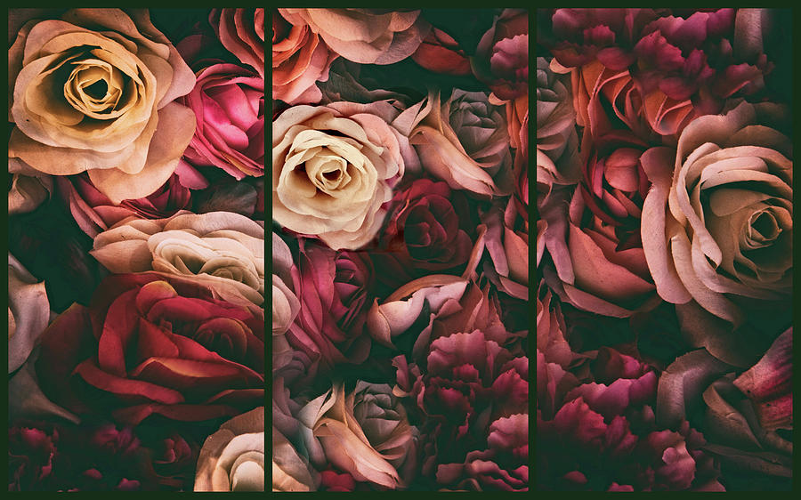 Roses Photograph - Rose Petal Triptych by Jessica Jenney