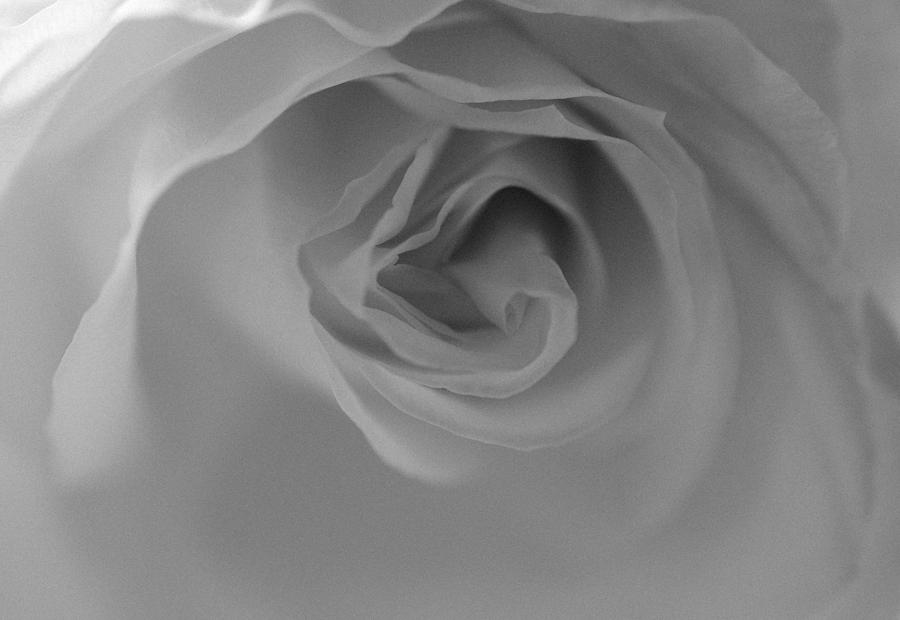 Rose - Poetic in Black and White by Marianna Mills